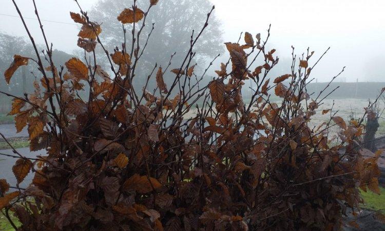 arbres et jardins de souday