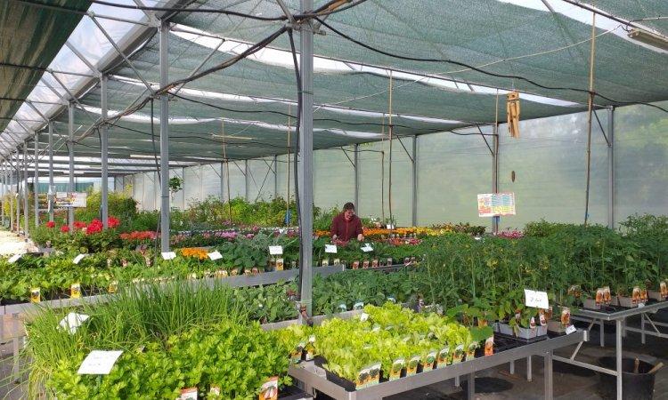 Arbres et Jardins de Souday à Souday - pépinière